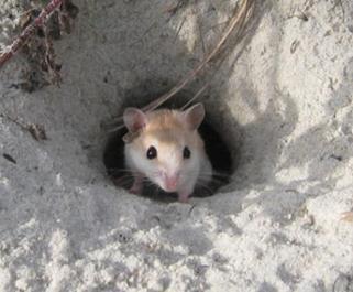 mouse-natgeo-image