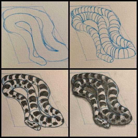 rat snake drawing.JPG